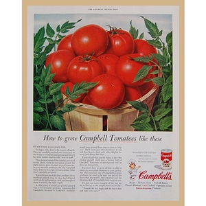 1955' Campbell's Tomatoes